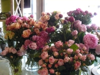Roses et Pioines 1